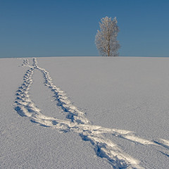 approach (Sergey S Ponomarev - very busy) Tags: sergeyponomarev canon eos ef24105f40l 70d landscape paysage landschaft paesaggio tree path steps footprints horizon blue winter inverno january abstract kirov russia russie russland viatka vyatka wjatka cold frost north nord nature natura 2017 snowshoes walk sunlight texture europe сергейпономарев природа пейзаж киров россия вятка дерево следы снегоступы зима мороз холод горизонт 1х1 1x1 square