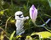 Stormtrooper with flower (jezbags) Tags: flower flowers lego legos legostarwars star starwars wars nature plants grass green touch reach canon60d canon 60d 100mm closeup upclose pink macro macrophotography macrodreams macrolego morning sunshine budding petals waterdrops rain raindrop water