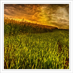 fields of joy (andreas_gartner64) Tags: light sunset sky color green nature field clouds photoshop square landscape lights spring afternoon peaceful andreas zen harmony hdr gartner harmonie postkarten d700