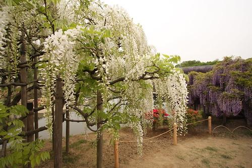 Ashikaga Flower Park 08