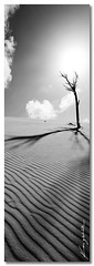 Black Lines ([ Kane ]) Tags: blackandwhite sun white black tree clouds landscape island photography sand shadows brisbane queensland ripples moretonisland tangalooma 1x3 kanegledhill wwwkanegledhillcom