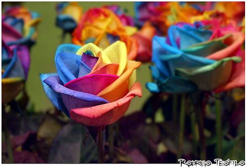 Minha vida em Flores