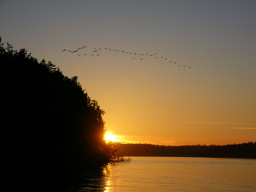 29-Odlin Geese Sunset