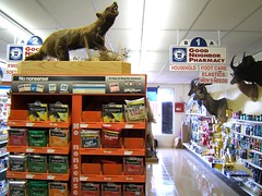 the no nonsense badger, you remember those commercials, right? (mary k) Tags: andlotsofit cartersvillega holtpharmacy taxidermyinaverystrangeplace