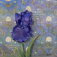 """Quiet Night"" Purple Iris on Blue, Print by Elizabeth Ruffing"