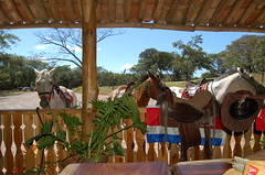 Black Stallion Office.Costa Rica. (Blackstallionhills.com) Tags: ranch homes horses costa house black real design office paradise estate ride rica hills pony land stallion teak guanacaste