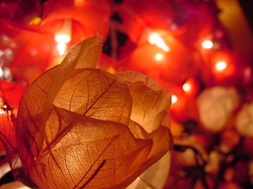 Flores luminosas