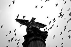 . (Markus Krisetya) Tags: blackandwhite bw birds dc washington streetphotography dcist ssp bsp hcsp bwsp wnwthebirds gwcm markuskrisetya