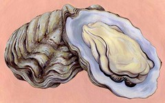 oysters (Robin MacLean Illustration) Tags: stilllife food fruit illustration watercolor painting menu french oakland design flavor designer drawing label gourmet oysters package packagedesign packagingdesign labeldesign foodillustration oystersonthehalfshell rawoysters packagingillustration packageillustration labelillustration