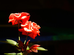 À Luz! (...anna christina...) Tags: travel flowers blue light sunset sea summer plant flores flower macro green beach nature water brasil garden cores plantas live natureza paisagem viagens lanscape encarnado annachristina flowersadminfave allxpressus annachristinaoliveira