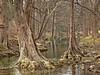 Cypress Creek - 63/365 (judy_n) Tags: favorite usa texas explore wimberley project365 10faves allin1 brillianteyejewel top20everlasting betterthangood judynicholls top20texas bestoftexas llovemypic hdr~lucisart~ortongroup