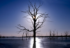 Realm of the Tree Gods (Kansas Poetry (Patrick)) Tags: ice oneofakind sunsets inspire soe hdr deadtrees clintonlake mywinners abigfave abigfav platinumphoto anawesomeshot citrit envyofflickr flickrelite ljomi champagnemoments betterthangood zenenlightenment goldstaraward onlyblu life~asiseeit absolutelystunningscapes