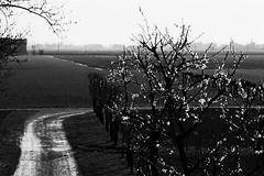 Un nuovo inizio (ernie_mcmillan) Tags: primavera spring nikon bn emilia campagna fiori bassa rinascita scansione sanprospero bassamodenese irredimibile