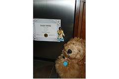 George and his Diploma ! He was the valedictorian !! He's one of Morgan and Chewy's puppies !