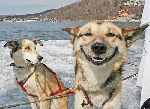 Happy Dogs Smiling Dog Smile Happy Dog