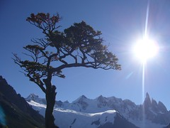 Fitz Roy - trek - arbre - soleil - sommets