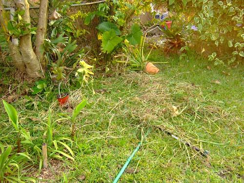 garden april 21, 2008 028