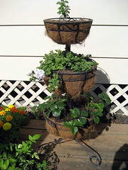 three tiered planter in spring