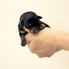 Qu va a ser de m, as. (Ibai Acevedo) Tags: dog color colour hand sleep dream perro cachorro mano cama dormir sof pequeo dulce qu sueo calor mimos vulnerable abrazos tierno insignificante diminuto rendido agarrado minsculo muyfrgil ltigos portazo