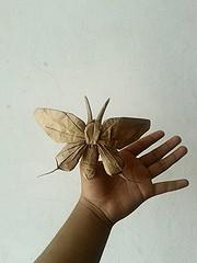 butterfly - nguyen hung cuong (javier vivanco origami) Tags: javier vivanco origami ica peru butterfly nguyen hung cuong