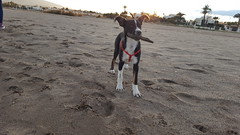 Charlie#2 (Verónica Álvarez) Tags: charlie blue marazul sea playa beach dog perro blackandwhite blancoynegro vera almería spain