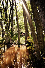 Morning... (claudia.susana) Tags: morning trees sunlight reflection water female forest outdoors pond model shine country warmth wideangle hammock lensflare ethereal dreamy relaxed sunflare 18mm nikond60 claudiasusana
