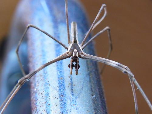 Spider 3of3