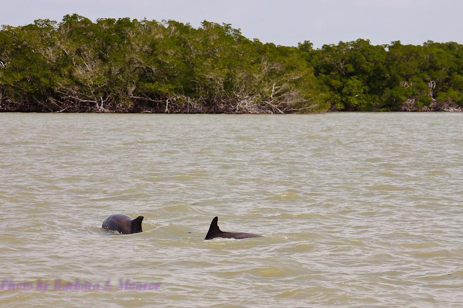 Everglades National Park-10,000 Islands (5 of 16)