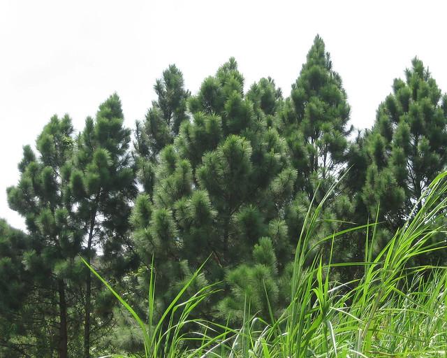 hondure
