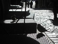birds in a peaceful sunday (J&Hem) Tags: world trip travel light sea sky nature weather wow ilovenature interestingness amazing interesting october flickr poetry paradise seasons calendar searchthebest juan keoni top20sunrisesunset shots earth quality magic apocalypse poetic baltic explore fantasy dreams environment rays idyll miracles idyllic limit daydream beams impressive global reverie herrero rve interestingness21 i500 specskyscape juanhm
