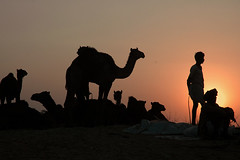 And the Sun Sets on Pushkar Fair by Koshyk