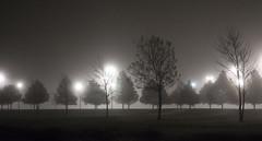 Silence in the Suburbs (sidehike) Tags: trees usa black fog night arlington lights landscaping tx gray foggy fav10 explore19
