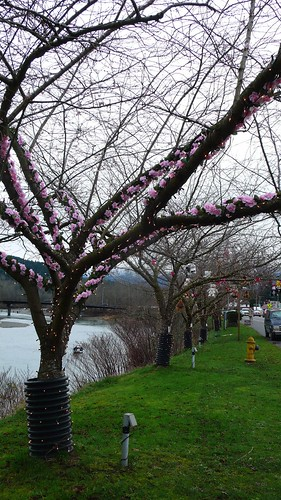 湖邊櫻樹布置得美輪美奐
