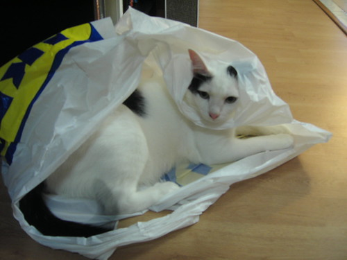 He loves his plastic bags