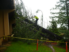 Trees fell on FSH Jan 4 2008 UCSC