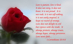 Love Never Fails... (honey 77) Tags: life roses flower love hope truth god jesus redrose lord christian patient kind bible christianity inspirational scriptures trusts godly 1corinthians13 bibleverse fruitofthespirit