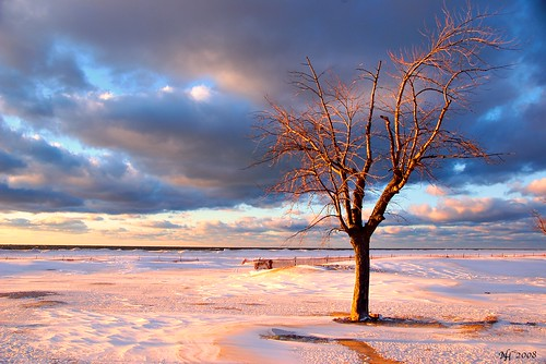 Lone tree on a winter beach