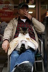nekochan (Said Karlsson) Tags: cat tokyo sleepy harajuku wwwsaidkarlssoncom