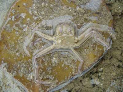 Crab-P1050675