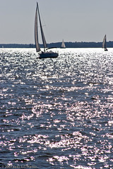 Four sailboats on the Chesapeake Bay (BACHarbin) Tags: usa motion wet water sailboat bay md waves sailing personal action yacht events bridges fast racing photoblog baybridge boating sail swift mast annapolis sailboats quick runningwater watercraft chesapeakebay yachting regata boatrace williamprestonlanejrmemorialbridge chesapeakebaybridge sailcloth woodwindcruise submittedtophotoshelter