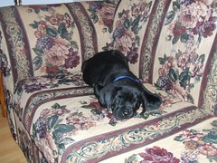 Jake on the couch