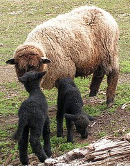 Mama Romney Twins 2008 Birth-Day