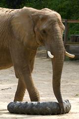Elephant Treads