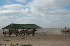 DSC_3651 (Debarella) Tags: buenosaires gauchos dontcryformeargentina holidaydelights