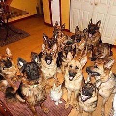 https://www.facebook.com/doggydeluxemallorca/   #doggy #deluxe #dog #hund #vip #exklusiv #malle #Mallorca #palma #palmademallorca #anjasofia #royal #presse #press #edel #luxus (Anja Sofia) Tags: hund malle vip palma anjasofia palmademallorca deluxe royal edel doggy mallorca exklusiv luxus presse press dog