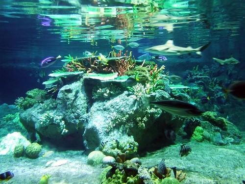 Acuario el Atolón de los Corales