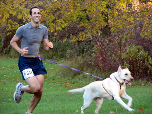 How To Get A Dog To Stop Whilst Running