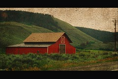 traveler : chasing dogs down a rural dirt road... (tofu_minx) Tags: red art texture barn rural painting mywinners platinumphoto