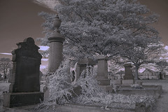 White Ivy (Bobshaw) Tags: world red cemetry ir dream ivy infrared infra hartlepool