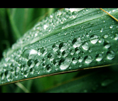 | T r o o p s | ( toma ) Tags: storm macro green nature water rain weather canon reflections leaf drops bravo bokeh refraction liqiud powershots2is toma01 flickrsbest theperfectphotographer